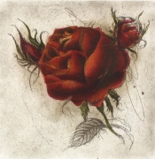Rose / Radierung 2008qu