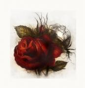 Rose / Radierung 2009qu