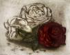 Rose / Radierung 1371