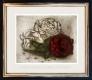 Rose / Radierung im Modellrahmen 1371