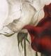 Rose / Radierung 1633
