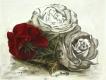 Rose - Radierung 1371