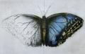 Radierung Schmetterling