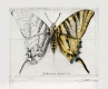 Radierung Schmetterling 1610