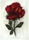 Rose - Radierung 1420